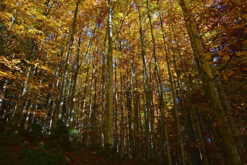 colori di autunno e della geometria fotografia stock libera da diritti