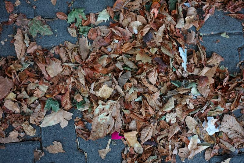 Colori di autunno e foglie di concetti di autunno degli alberi fotografie stock