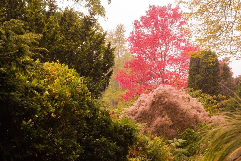Colori di autunno nei giardini botanici del bagno fotografia stock libera da diritti