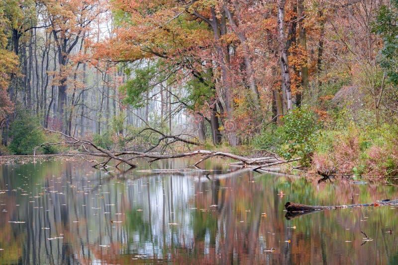 Colori di autunno in fiume fotografia stock libera da diritti
