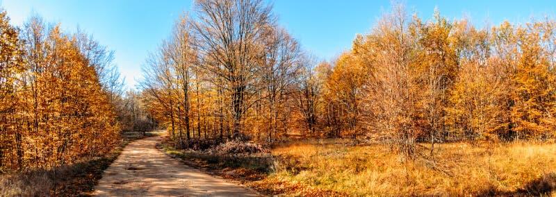 Colori di autunno nel lato del paese fotografia stock libera da diritti