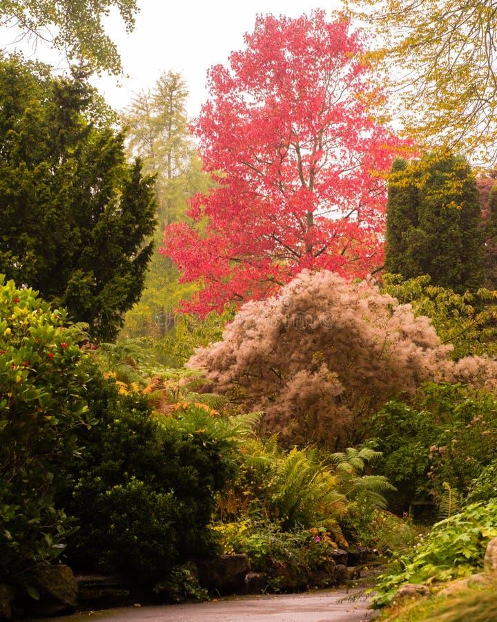 Colori di autunno in ritratto dei giardini botanici del bagno immagine stock libera da diritti