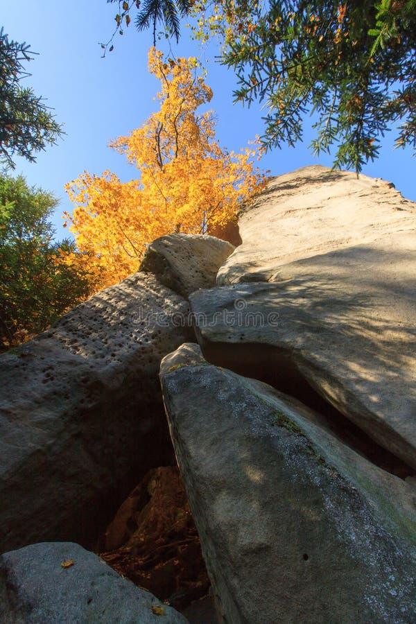 Colori di autunno - roccia ed albero fotografie stock
