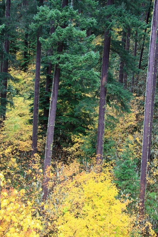 Colori di caduta della regione selvaggia dell'Oregon fotografie stock libere da diritti