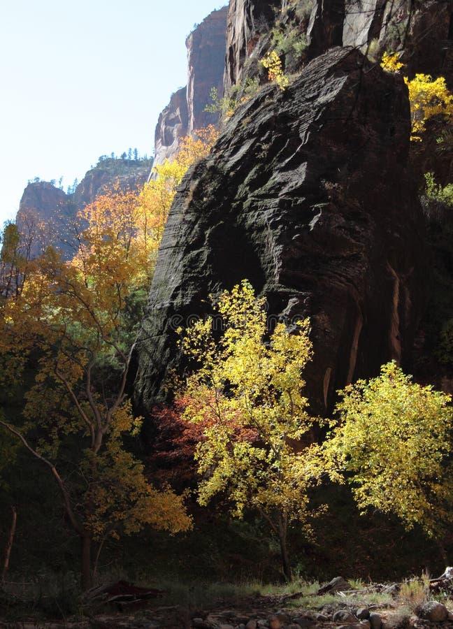 Colori di caduta nella gola del fiume vergine in Zion National Park fotografia stock libera da diritti