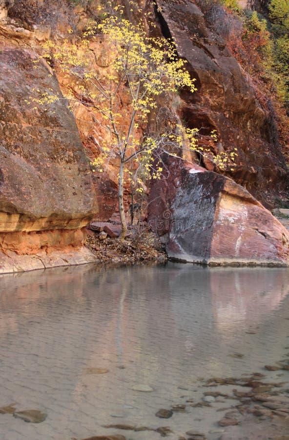 Colori di caduta nella valle del fiume vergine in Zion National Park fotografie stock