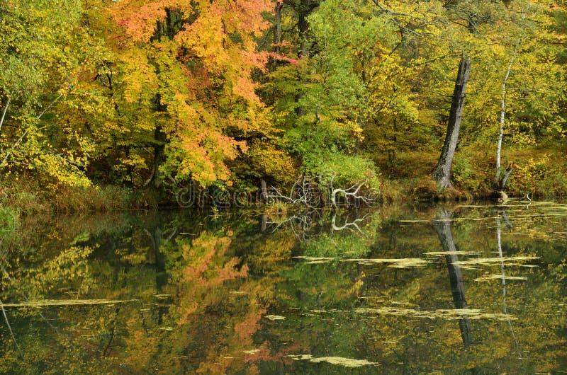 Colori di caduta riflessi su un lago fotografia stock