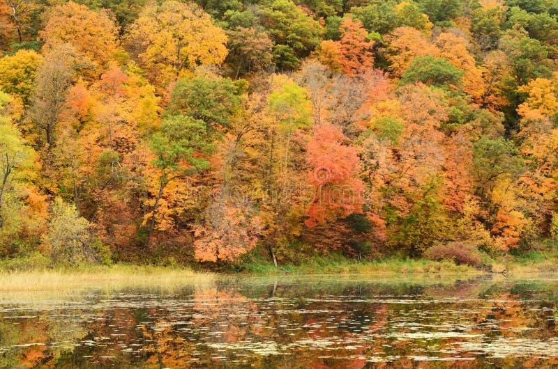 Colori di caduta riflessi su un lago immagini stock libere da diritti