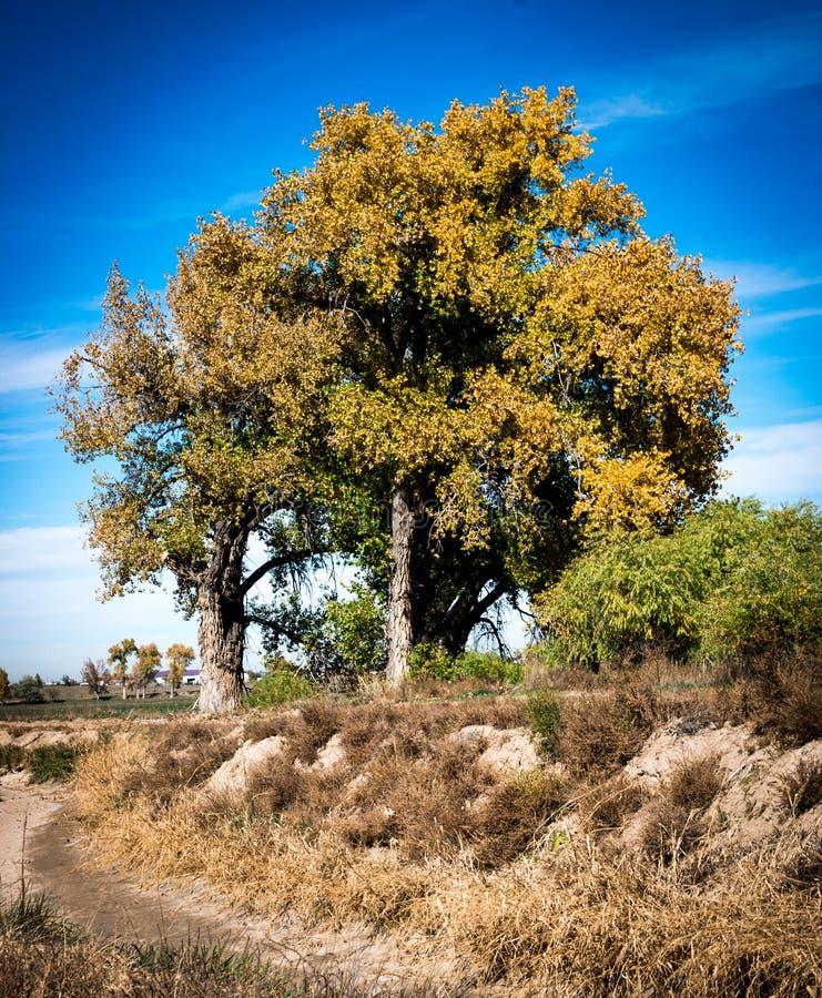 Colori di caduta sugli alberi in pianure orientali di Colorado fotografia stock