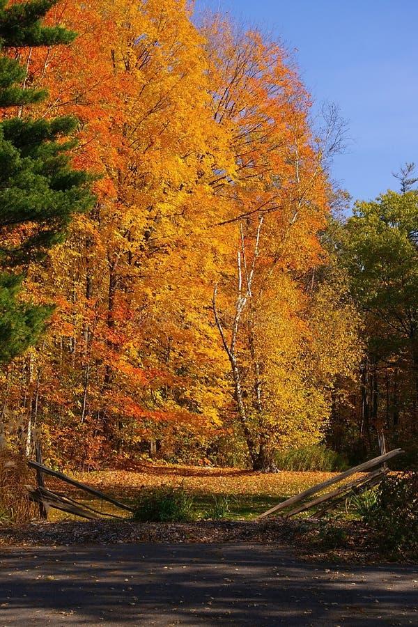 Colori di stagione di caduta immagine stock immagine di - Immagine di terra a colori ...