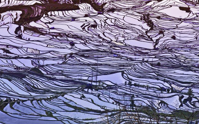 Colori di tramonto sui terrazzi del riso fotografie stock libere da diritti