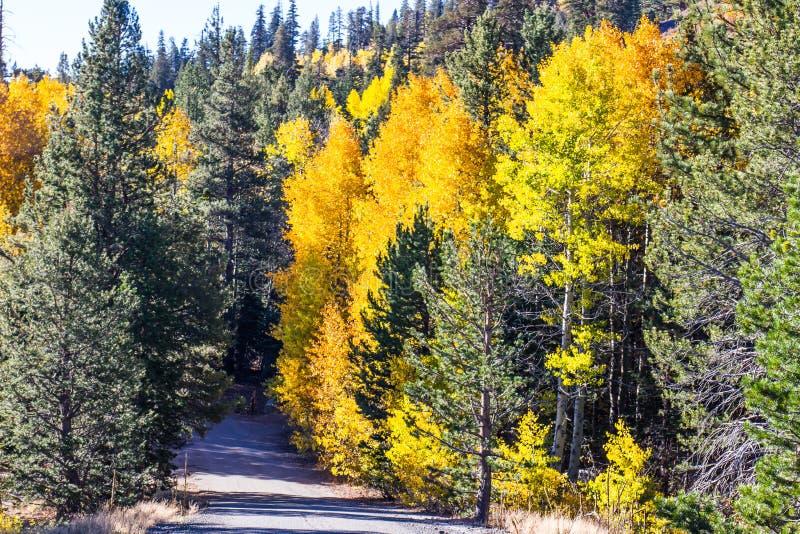 Colori dorati della caduta lungo la strada della montagna immagini stock