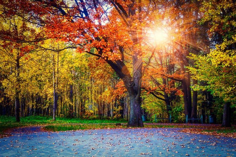 Colori gialli nel parco di autunno Paesaggio degli alberi variopinti in Central Park Autunno di paesaggio al tramonto Raggi di Su fotografia stock libera da diritti