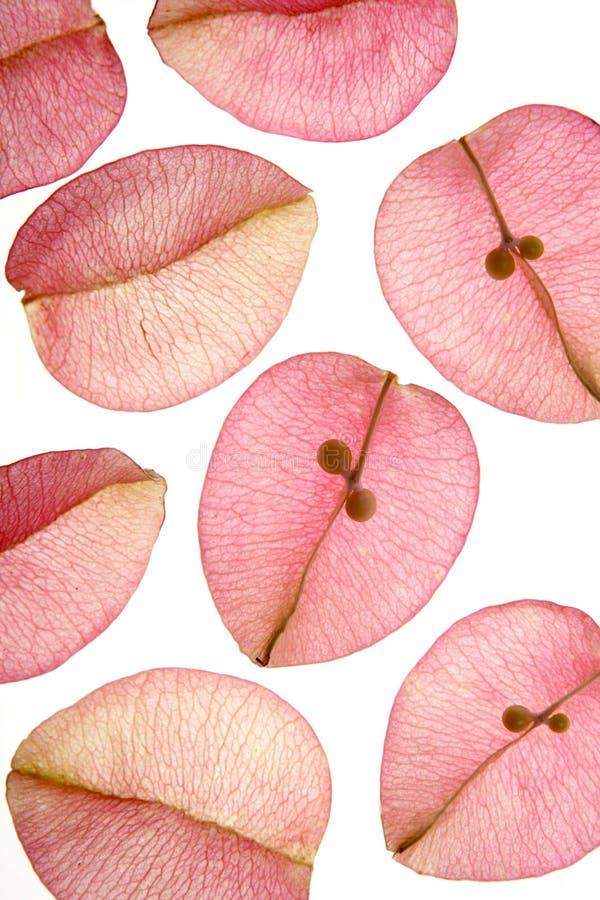 Colori i fiori, i fogli, petali, ha isolato la parte posteriore di bianco immagini stock