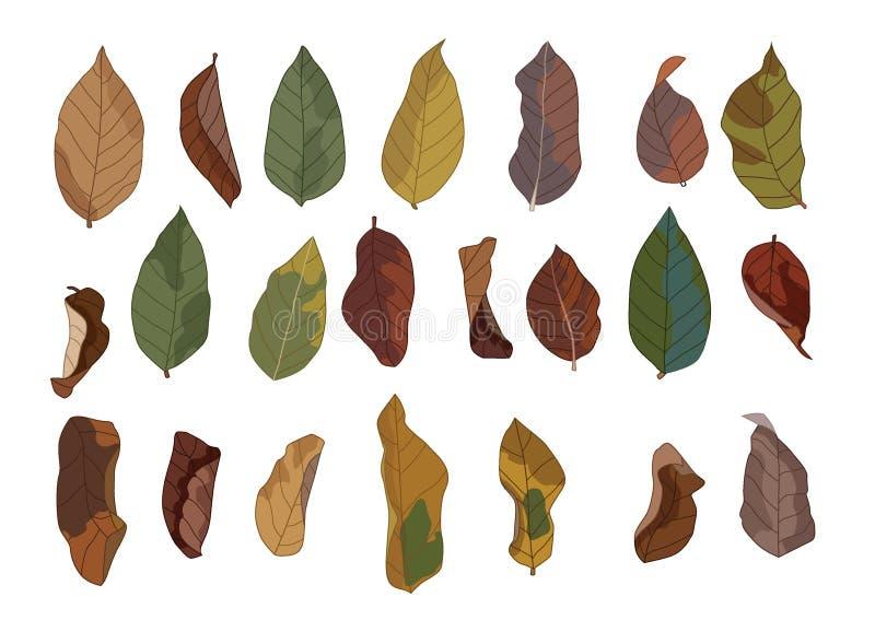 Colori l'autunno asciutto asciutto marrone della pittura della foglia e delle foglie di Brown giù la terra illustrazione vettoriale
