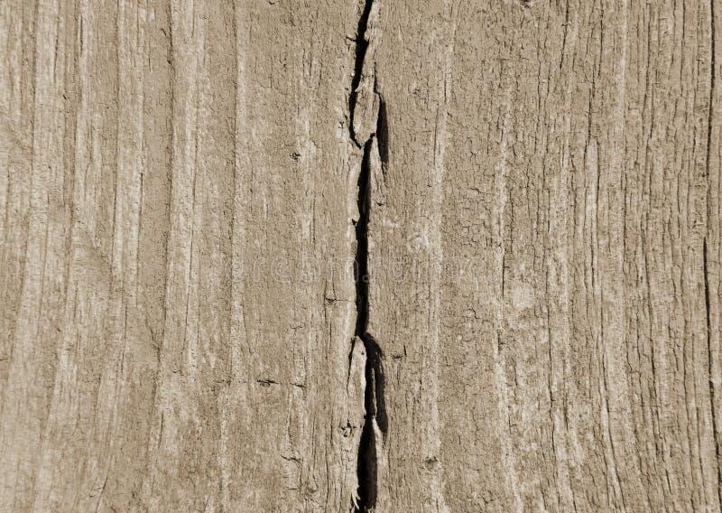 Colori neutri di legno di marrone di struttura immagini stock