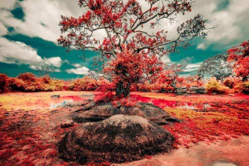 Colori surreali e paesaggio di fantasia della natura selvaggia dello Sri Lanka fotografia stock libera da diritti