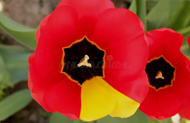 Colorida e vernally fotos de stock royalty free