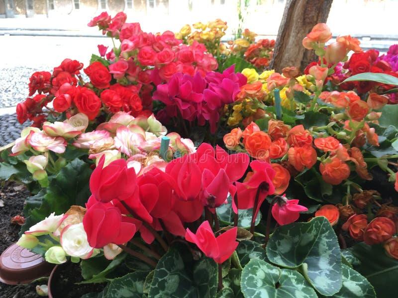 Coloridamente flor imagens de stock royalty free