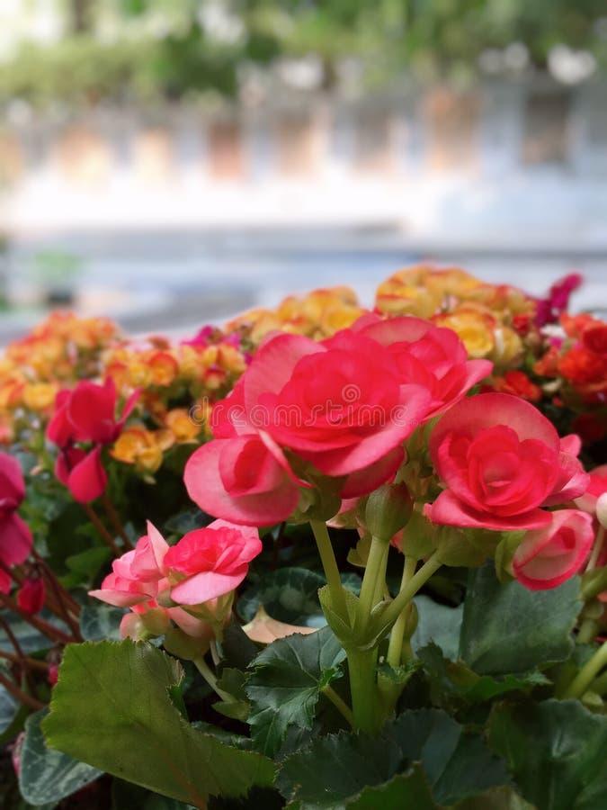 Coloridamente flor fotografia de stock