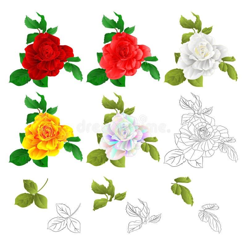 Colorido amarelo branco e esboço do rosa vermelho de Rosa com vintage natural da aquarela dos botões e das folhas no illus branco ilustração stock