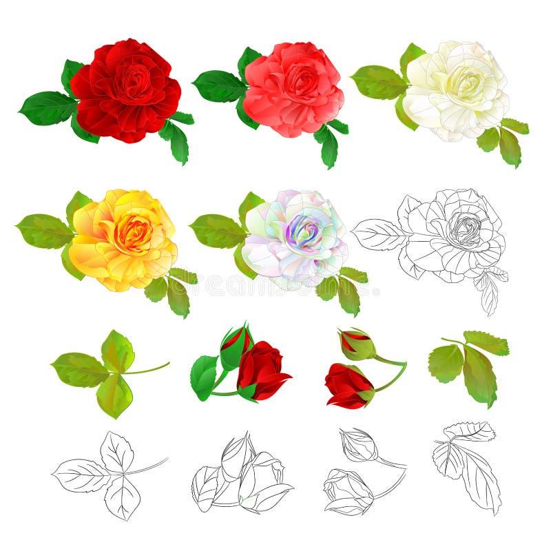 Colorido amarelo branco e esboço do rosa vermelho de Rosa naturais e para esboçar o vintage em uma ilustração branca do vetor do  ilustração royalty free