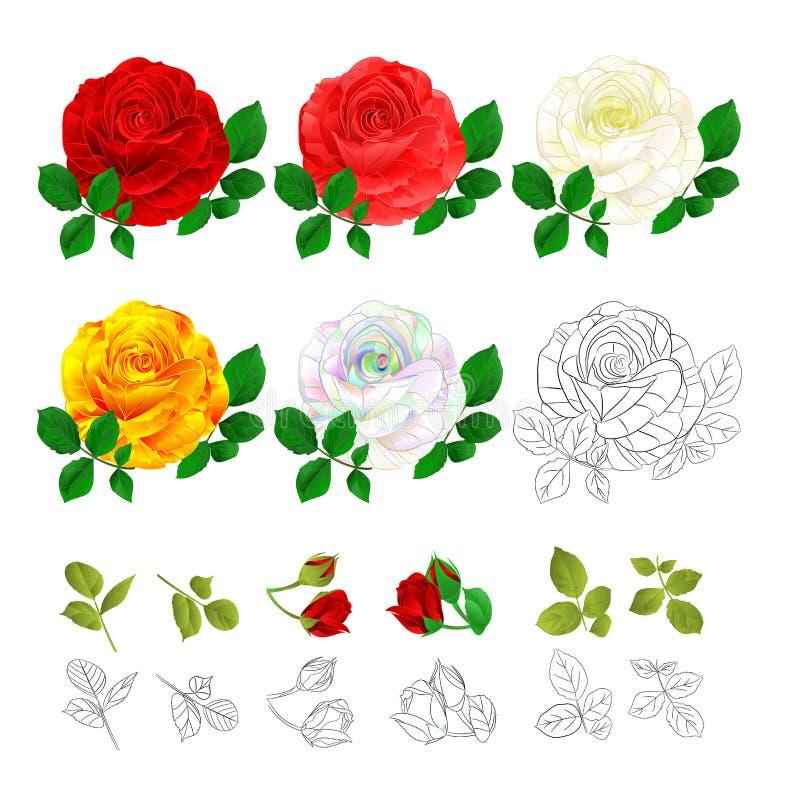 Colorido amarelo branco vermelho e esboço do rosa de Rosa naturais e para esboçar o vintage em uma ilustração branca do vetor do  ilustração royalty free