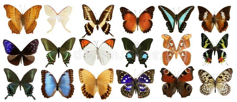 Colorido de la colección de las mariposas aislado en blanco ilustración del vector