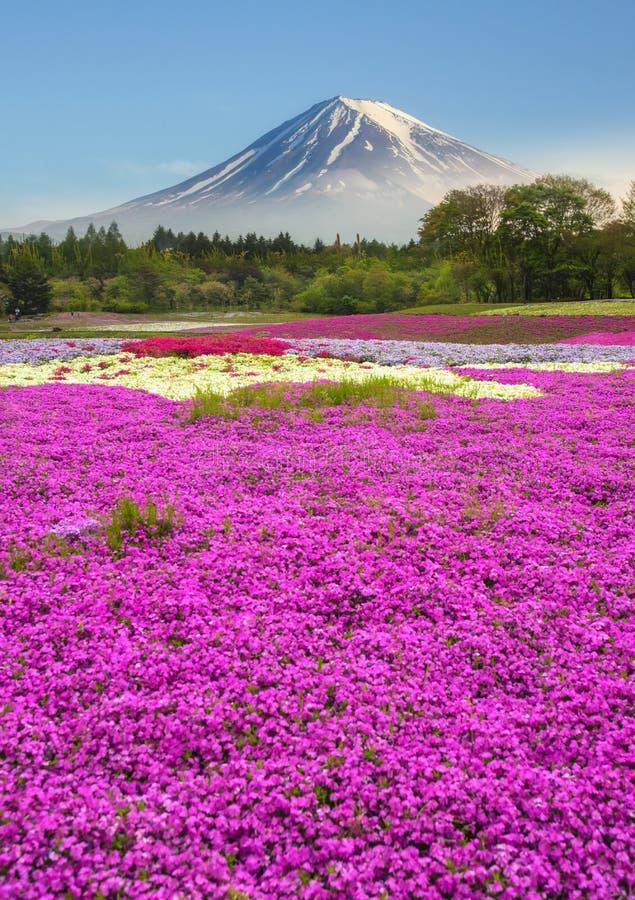 Colorido de la montaña Fuji con el campo de flor imagenes de archivo