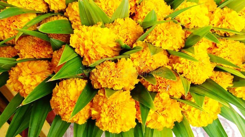Colorido de muchas flores de la maravilla fotografía de archivo libre de regalías