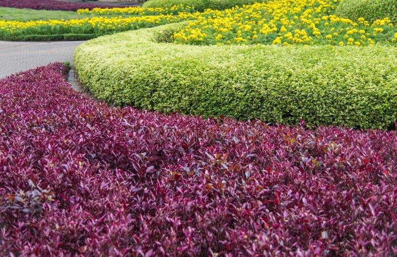 Colorido de paisaje en flores hermosas del jardín imágenes de archivo libres de regalías