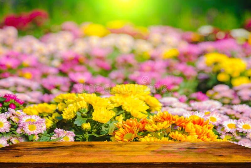 Colorido do crisântemo floresce na tabela do jardim e da madeira fotografia de stock