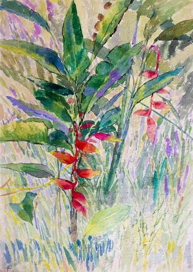 Colorido original da paisagem da pintura da aquarela de Heliconia floresce ilustração royalty free