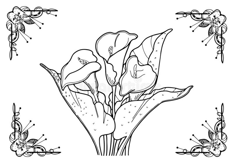Flowers. Calla black line in frame. On a white background. Coloring for adults. Coloring for adults. Flowers Callas. The outline drawing of a black line on a stock illustration