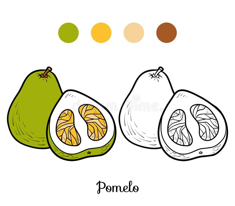 Coloring book, Pomelo. Coloring book for children, Pomelo royalty free illustration