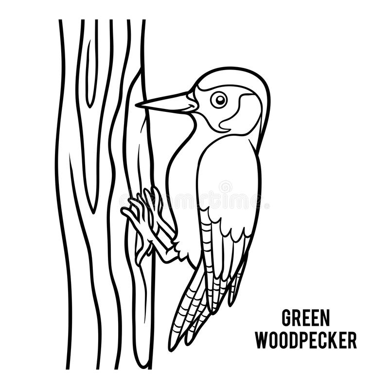 Coloring book, Green woodpecker stock illustration