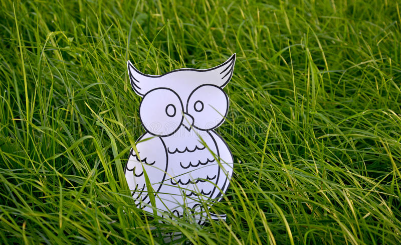 Coloring book owl bird in a green grass vector illustration