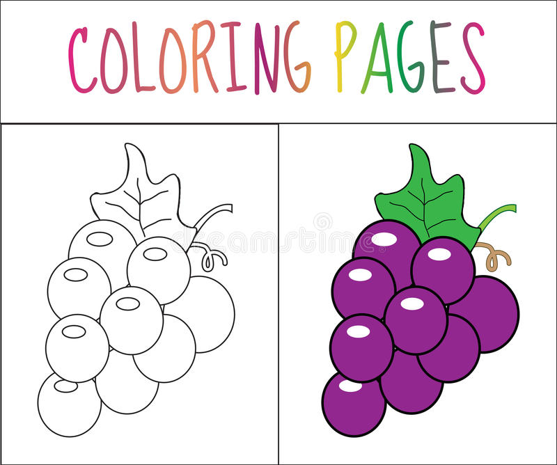 Coloring book page. Grapes. Sketch and color version. Coloring for kids. Vector illustration.  royalty free illustration