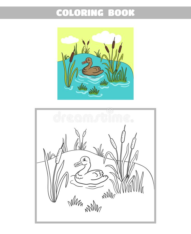 Free Coloring Book Pond Duck Stock Photography - 109271612
