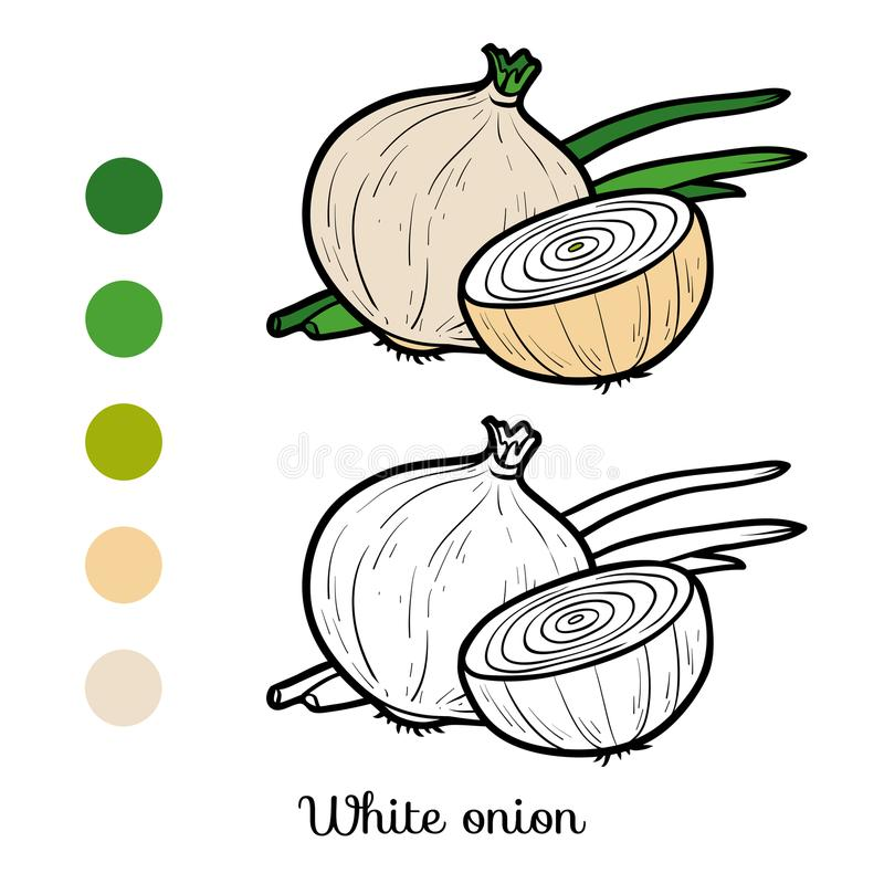 Free Coloring Book, White Onion Royalty Free Stock Photo - 111202065