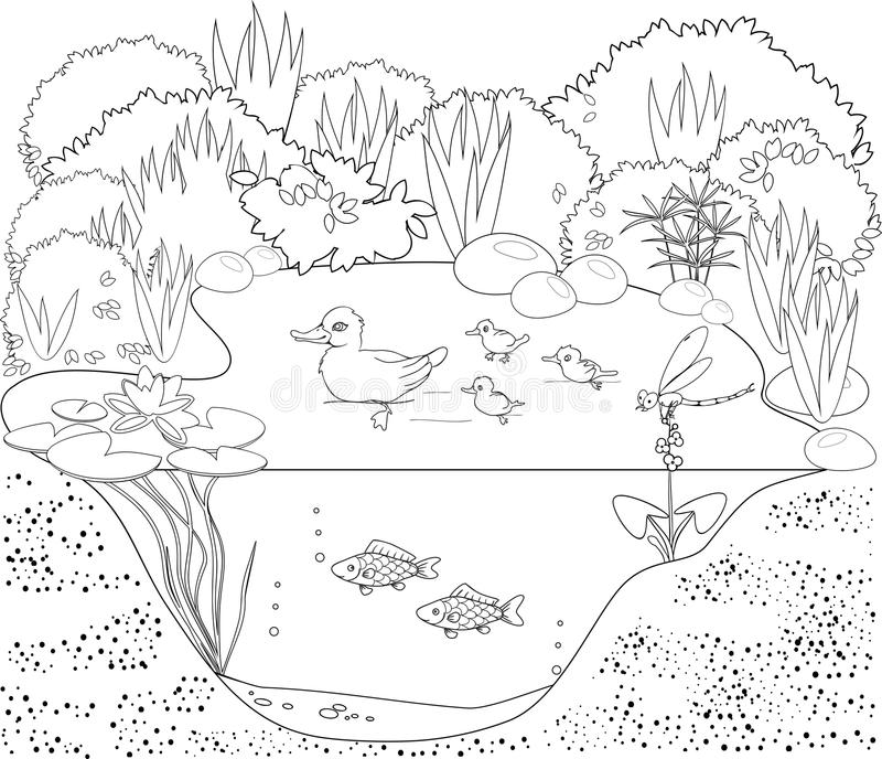 pond ecosystem coloring pages | Coloring Duck Pond Stock Vector - Image: 61553156