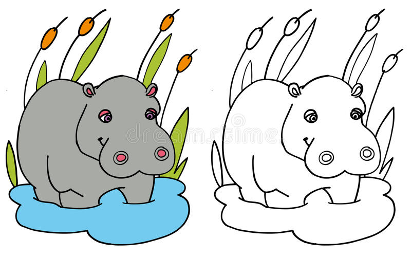 Coloring hippo COLOR and BW. A coloring page of a hippo for kids - isolated on white stock illustration