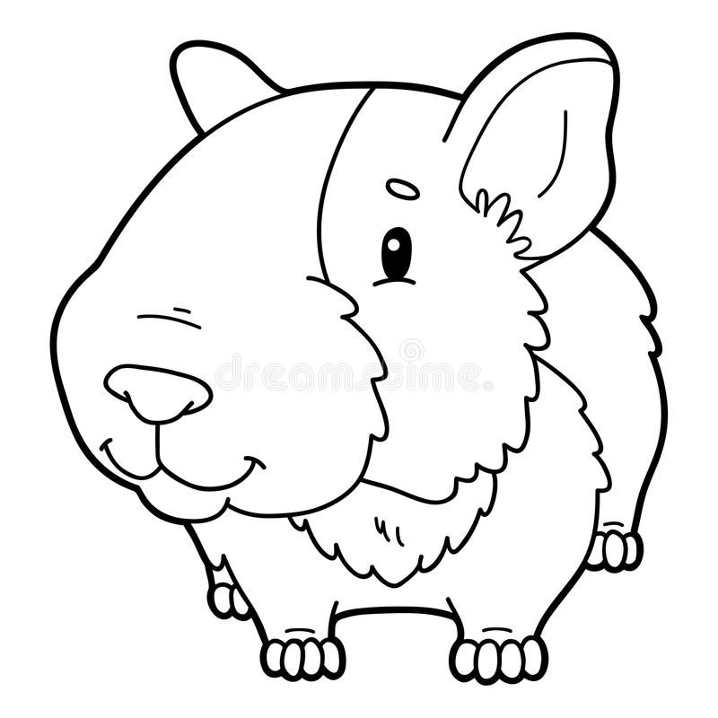 Coloring Page Cartoon Guinea Pig Stock Vector Illustration Of