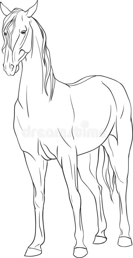 coloring page horse book standing