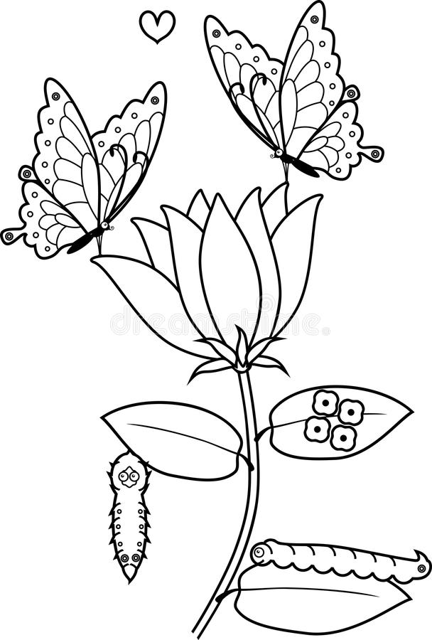 Coloring Page. Life Cycle Of Butterfly Stock Vector - Illustration ...