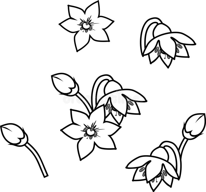 Coloring page with pepper flowers vector illustration