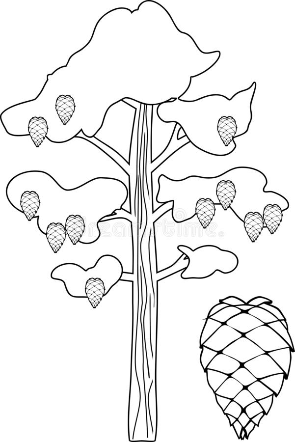 Pine Tree Coloring Stock Illustrations 983 Pine Tree Coloring Stock Illustrations Vectors Clipart Dreamstime