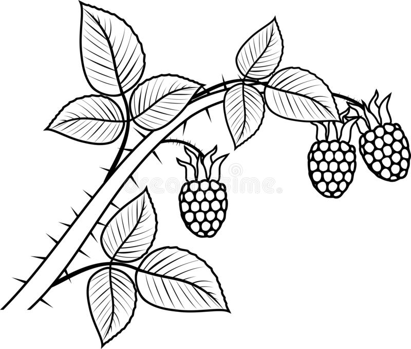 Free Plant Coloring, Download Free Clip Art, Free Clip Art on ... | 678x800