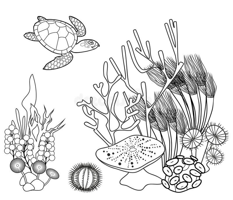 Coral Reef Coloring Page Stock Illustrations – 780 Coral Reef Coloring Page  Stock Illustrations, Vectors & Clipart - Dreamstime