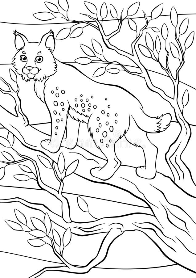Coloring pages. Animals. Little cute lynx. Coloring pages. Animals. Little cute lynx stands and smiles stock illustration